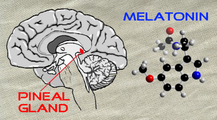 Melatonin and the Pineal Gland
